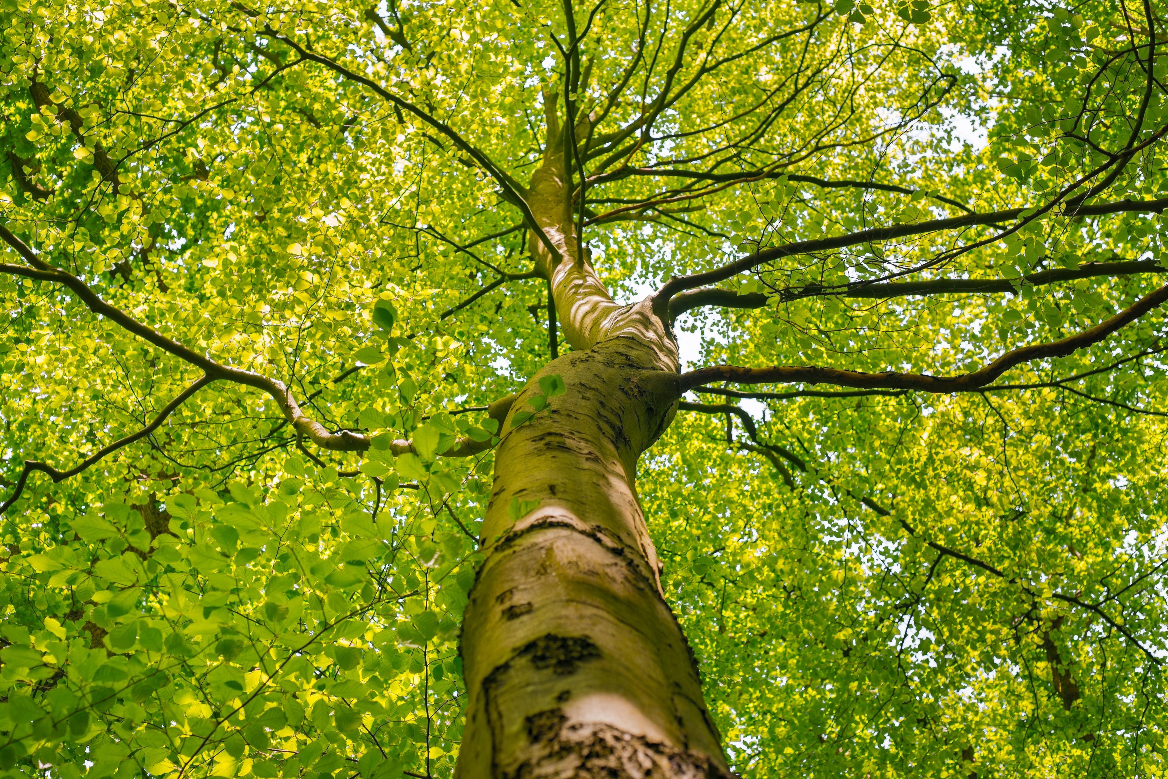 puun etäisyys rakennuksesta