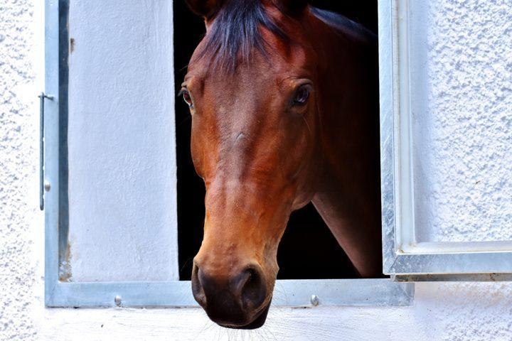 Asianajajat ovat törmänneet mm. asuntoon sisälle tuodun hevosen tapaukseen.