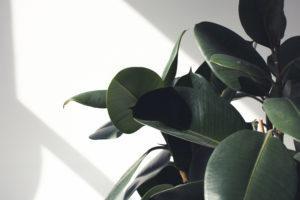 Hyvä huoneilman suhteellinen kosteus on talvella 20–40 %. Viherkasvit lisäävät ilmankosteutta.