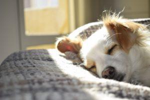 Lemmikkieläimiä on jo kolmasosassa kotitalouksista.
