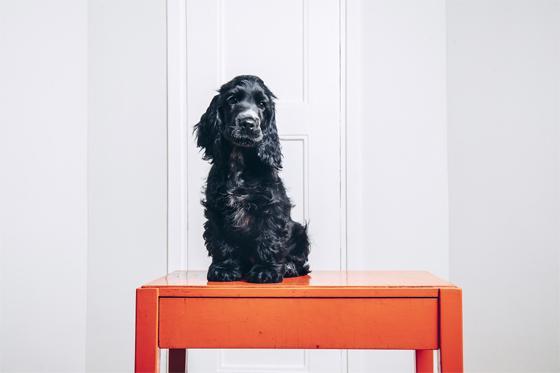 Lemmikit kuuluvat taloyhtiössä normaaliin asumiseen, mutta mitä tehdä, jos ne ärsyttävät?