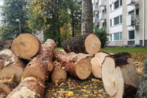 Pihapuut voivat olla joko taloyhtiön tai osakkaan vastuulla.
