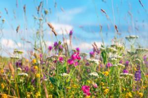Asoy Satakielenpuisto käyttää palkintorahat kukkaniityn perustamiseen.