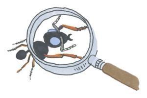Kodin tuholaisiin, kuten sokerimuurahaisiin kannattaa reagoida varhaisessa vaiheessa, ettei tuholaistilanne pääse kasvamaan ongelmaksi asti.